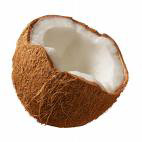 coconut photo from microsoft