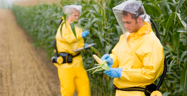 GMO-foods-health-risks-and-how-to-avoid-them