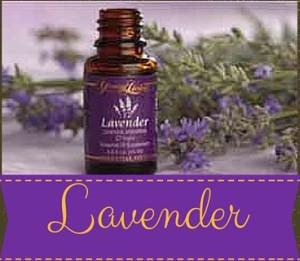 YL GBW Lavender 01
