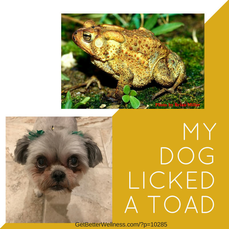 My dog licked a toad-3